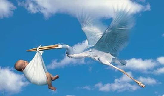Why-Storks-Deliver-Babies